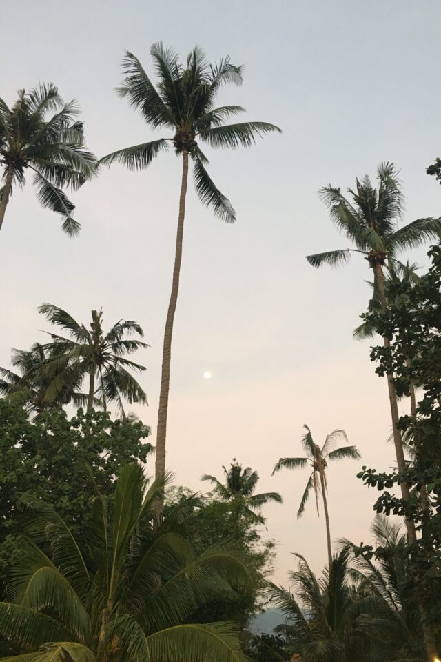 """""""Palmtrees on the beach of Koh Chang"""""""