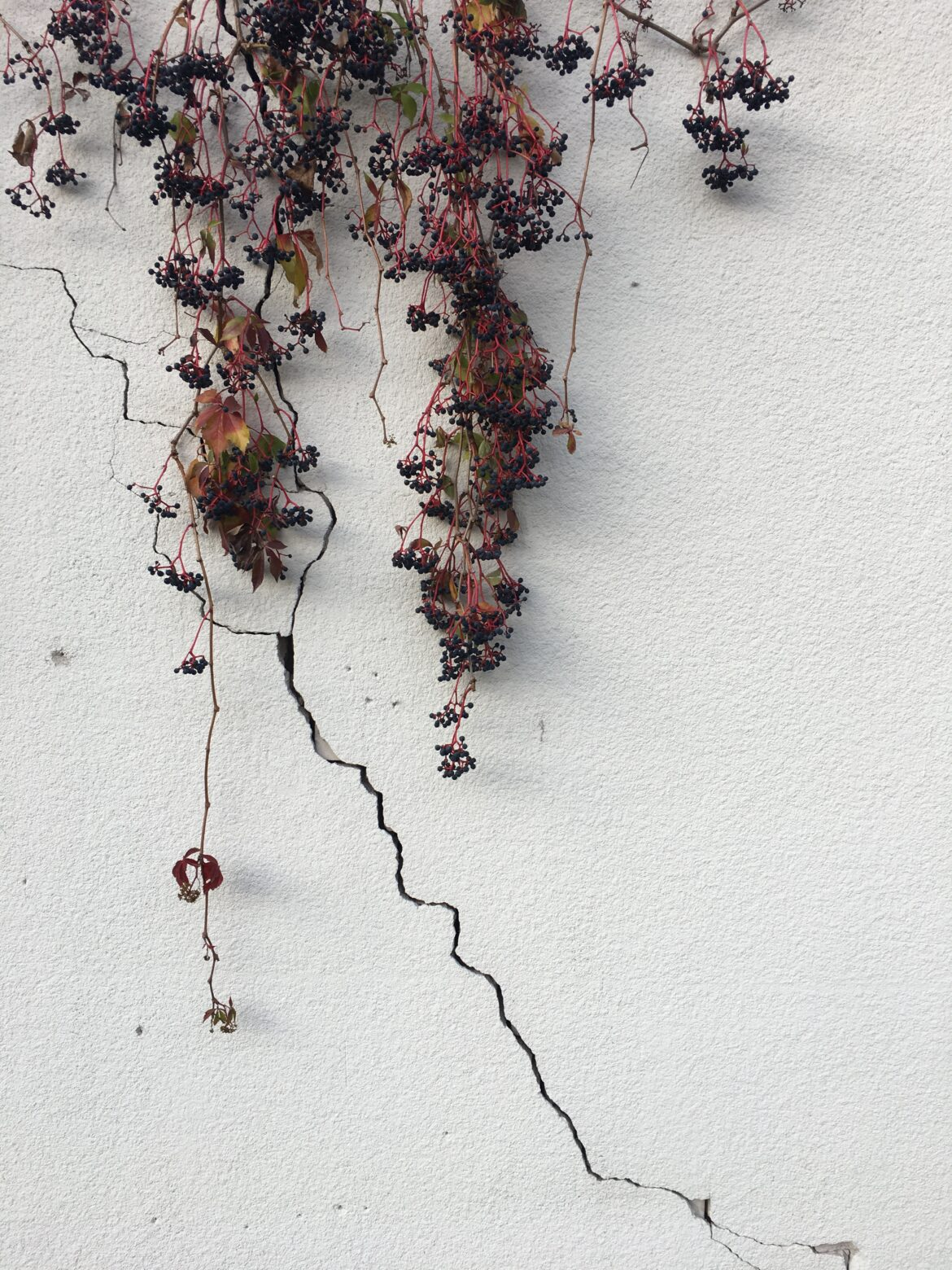 """""""Leaves and cracks in the wall, Vilnius"""""""
